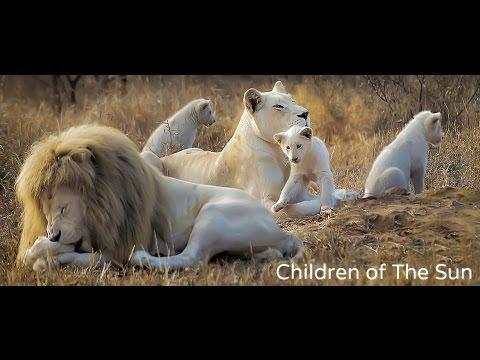 Sauriez-vous nommer les cinq «Lions d'Afrique»?
