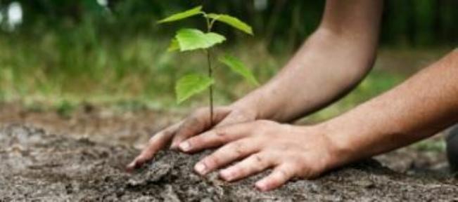 G « green » 7 : 100 000 arbres plus tard !