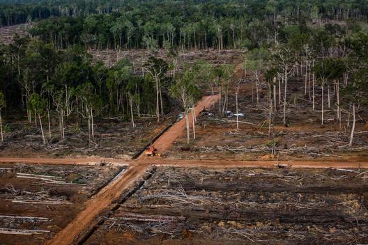 Greenpeace dénonce les multinationales toujours responsables de déforestation avec l'huile de palme
